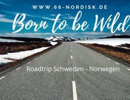 Born to be Wild - Titelbild